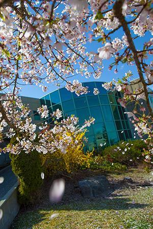 VIU Student Services Building 200 through flowering trees